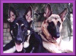 picture of GSD sisters